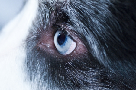 eye of the dog photo