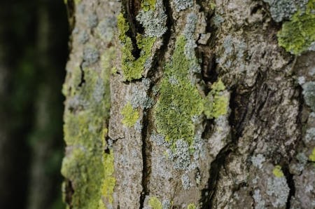 textured tree bark with green lichen