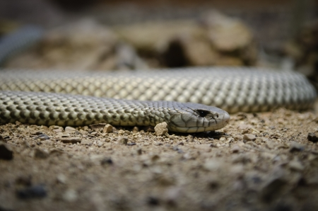 snake narrow field of view