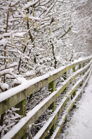 Snowy fence, trees   bushes on a tow path in England Stock Photo