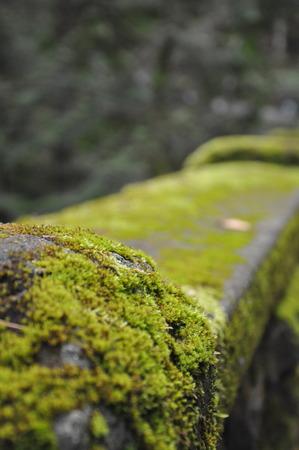 mossy: Mossy Bridge