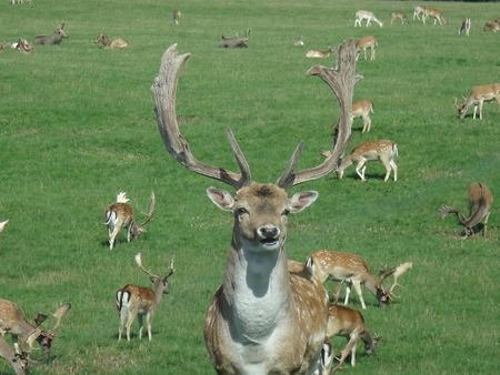 Oh Deer... Reklamní fotografie