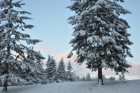 Northwest Winter Banco de Imagens - 51035537