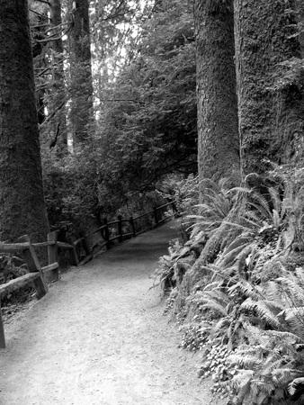 Forest Walk Banco de Imagens - 51035585