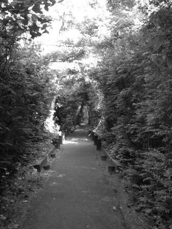 Forest Walk Banco de Imagens - 51035763