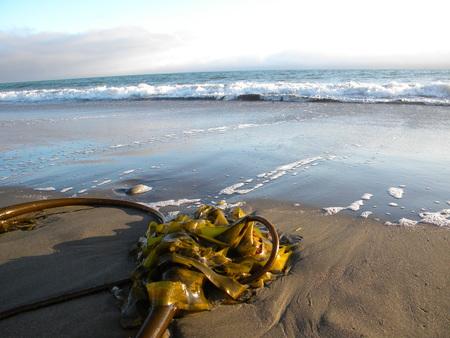 Ocean Waves Banco de Imagens - 51035772
