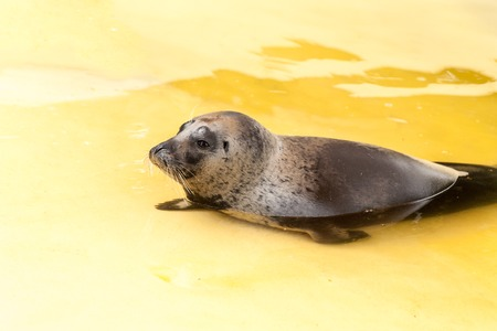 pup: Common Seal Pup. Cute Baby Animal. Love concept.