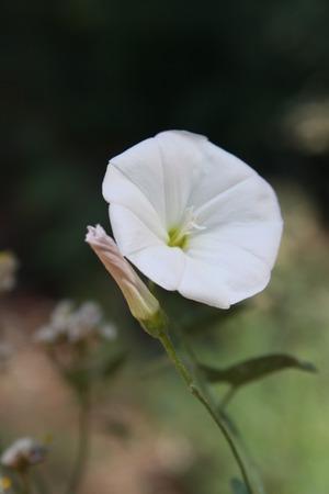 Hedge Winde
