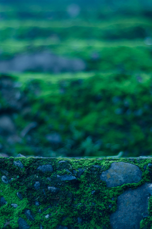A whimsical feeling abstract view of moss covered steps in a forest