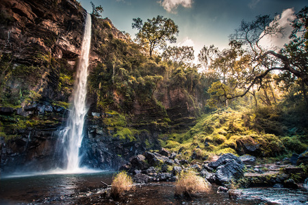 Lone Creek Waterfall in Mpumalanga, South Africa, with sunlight streaming through foliage over mossy banks