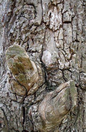 Antecedentes - cortezas de árbol  Foto de archivo - 207328