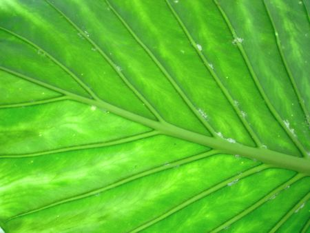 Close up of a green leaf Stock Photo