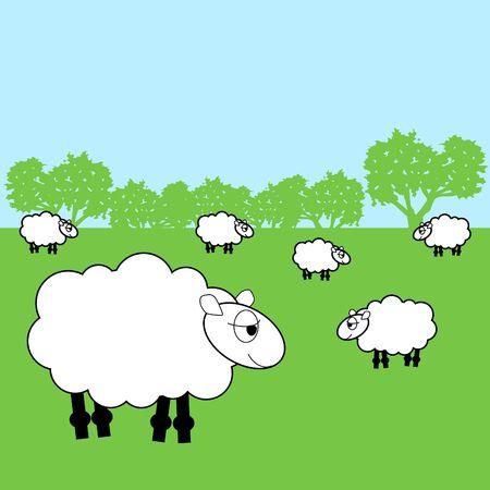 sheep in a field Reklamní fotografie