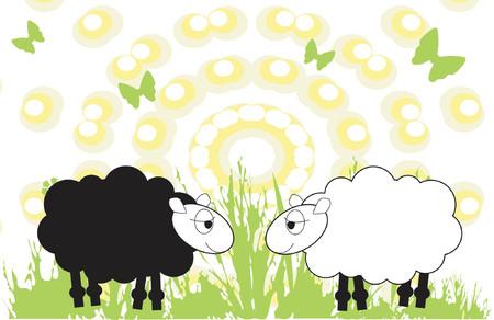 cattle grazing: Sheep in a field