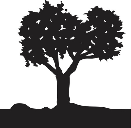 cedar tree: Silhouette of a tree - vector image which is easy to edit