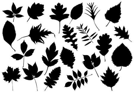 honeysuckle: Leaf silhouettes