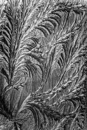 美しいパターンをエッチング ジャック霜は、自然によって作られた渦巻く模様の鉛筆のように変換されます。