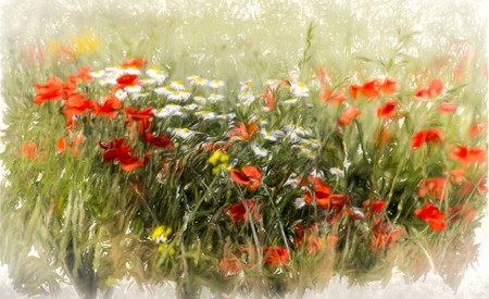 red poppies on green field: Poppy field, abstract image of wild flowers in a field in summer, watercolour look. Stock Photo