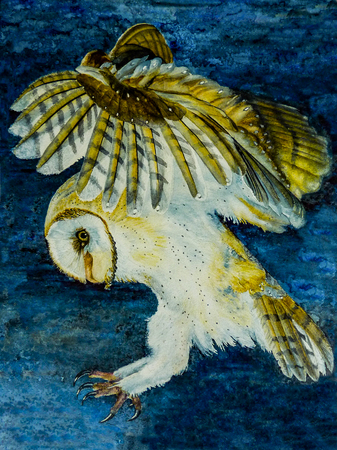 Watercolor painting of a barn owl hunting