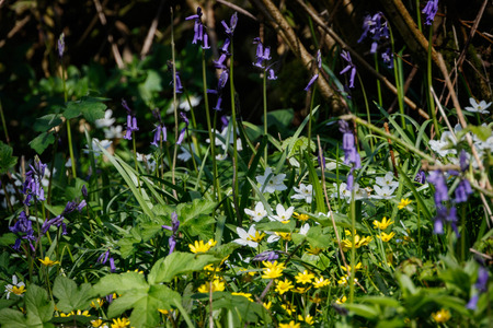 floor covering: Mixed wild flowers covering the woodland floor