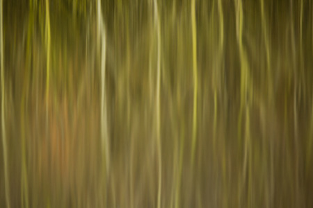 still water: abstract reflection of reed beds and trees in still water Stock Photo