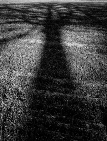 Long shadow of single tree and branches in mono