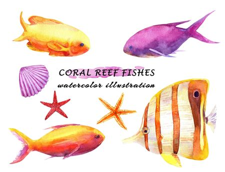 Watercolor set of colorful reef fishes, starfish and molluscs. Hand drawn illustration isolated on white background.