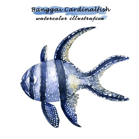 Watercolor illustration of Banggai Cardinalfish. Isolated on white background. Banque d'images - 128416440