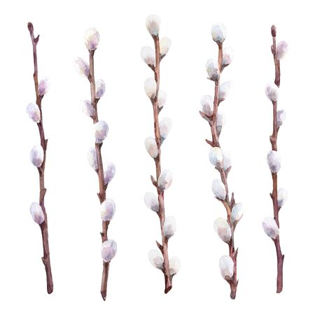 Watercolor set of pussy willow branches. Hand drawn illustration.
