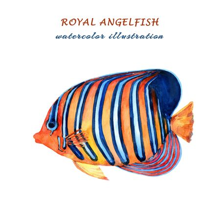 Royal angelfish. Watercolor hand drawn illustration isolated on white background.
