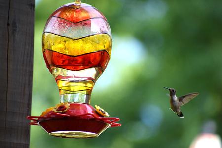 Hummingbird flying to feeder