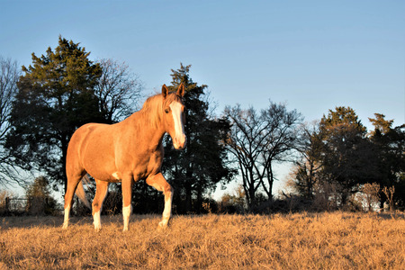 horse at sunset portrait
