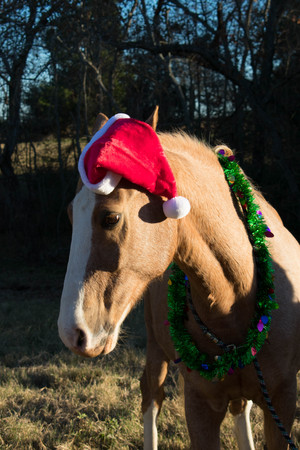 portrait of a horse at Christmas 免版税图像