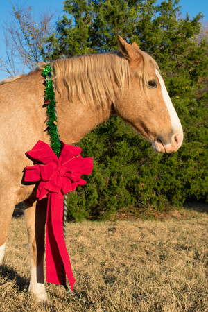 portrait of a horse at Christmas 写真素材