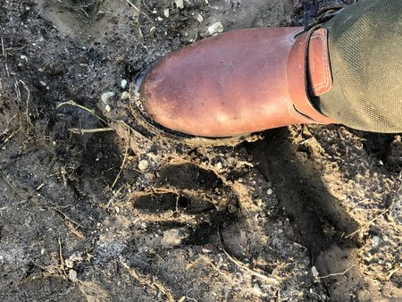 animal print in the mud