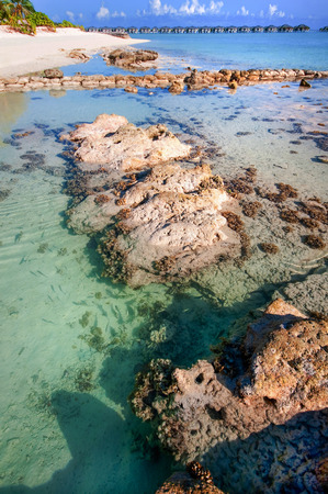 shallow water: Shallow water with small fishes and coral stones at the shore of Maldivian island.