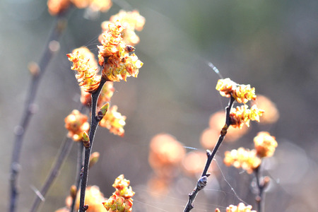 Whispy spider silk floats between the flowers of a wetland bush