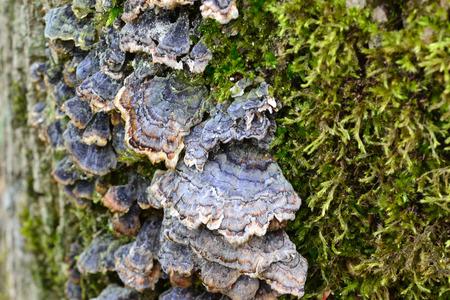 Mosses and mushrooms on decaying wood Фото со стока