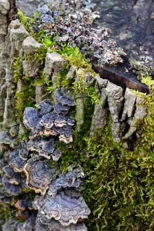 Mosses and mushrooms grow on a decaying stump Фото со стока