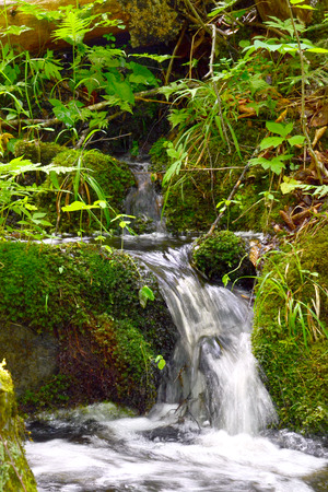 Water rushes through small plants in the forest Фото со стока