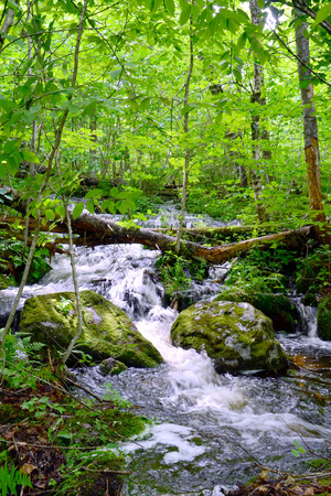 A mountain stream rushes down a hillside in Maine