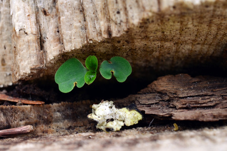 reach out: Moss and seedlings reach out of a decaying log for sunlight