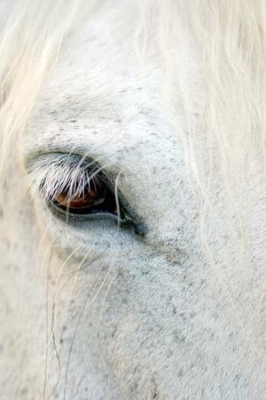 Gentle white horse Фото со стока