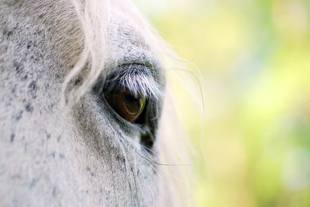 White horse at eye level Фото со стока
