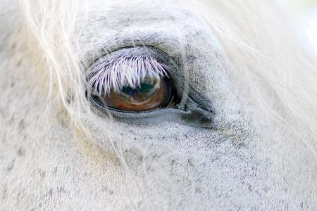 Details of a white horses eye