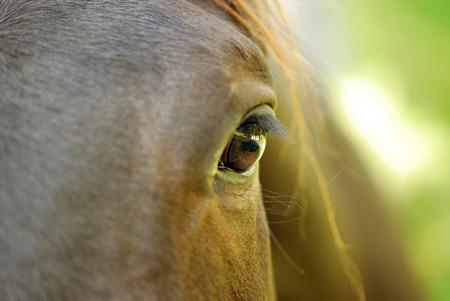 Brown horse at eye level