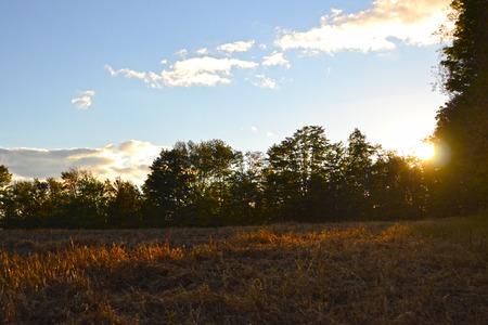 Sunset in the field Фото со стока