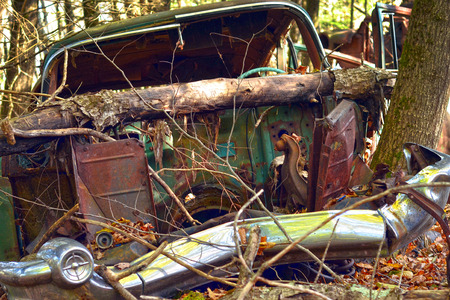 junk car: An abandoned car with a fallen tree