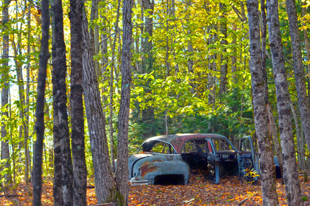 An abandoned car among the trees