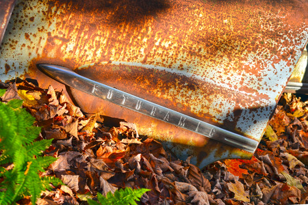Rusty car door with ferns and autumn leaves